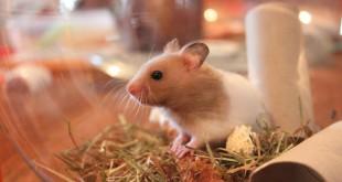 Hamsterkäfige kaufen