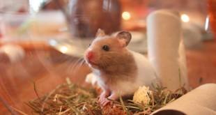 Hamsterkäfig einrichten